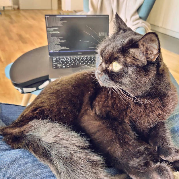 Photo shared by Coffee'n'Code on November 23, 2020 tagging @comment_sense, @thepracticaldev, @code.community, @webdeveloper.io, @lovecoders, @programer.life, @codeclique, @_whatthetech, and @_devcommunity. May be an image of cat.