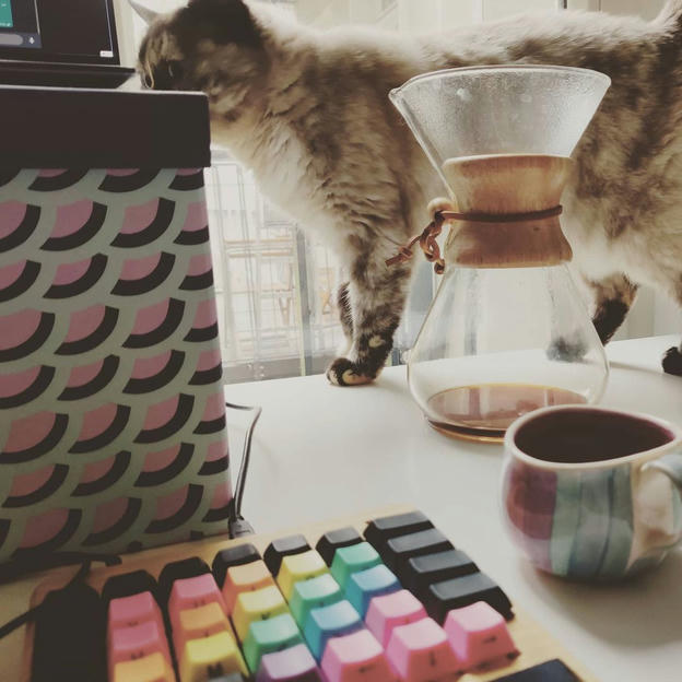 Photo shared by Coffee'n'Code on October 21, 2020 tagging @cats_of_instagram, @comment_sense, @falba.tech, @code.community, @lovecoders, @programunity, @codeclique, @_whatthetech, and @_devcommunity.